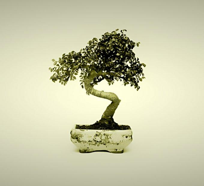 ces_bonsai